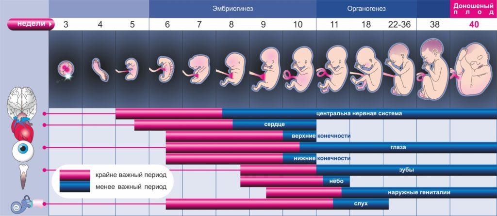 Календарь беременности по неделям позволяет рассчитать дату родов