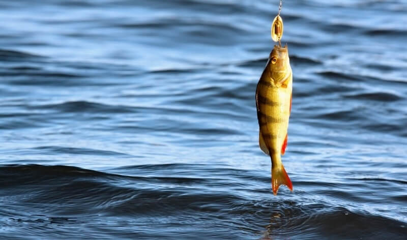 Сон о ловле рыбы
